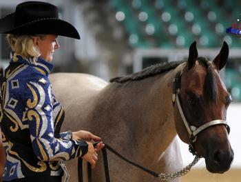 deutsche quarter horse association